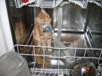 Charley in Dishwasher